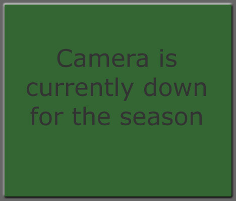 Hummingbird webcam is down for the season